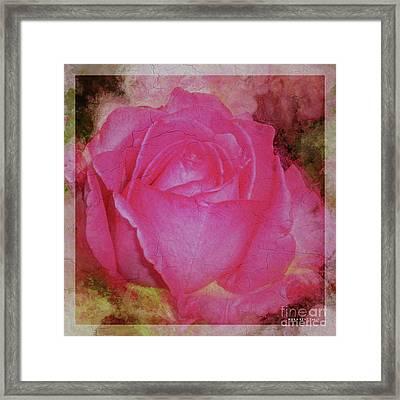 Rose Pastel Soft Sorbet 3 Framed Print