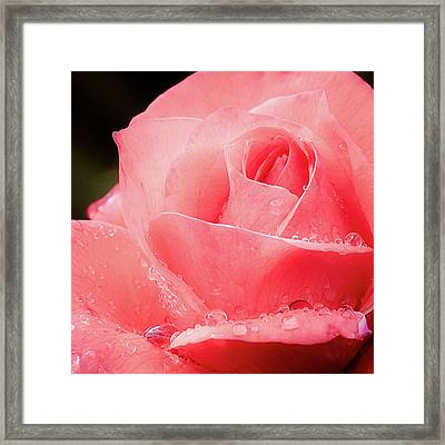 Framed Print featuring the photograph Rose Petals And Drops Macro by Julie Palencia