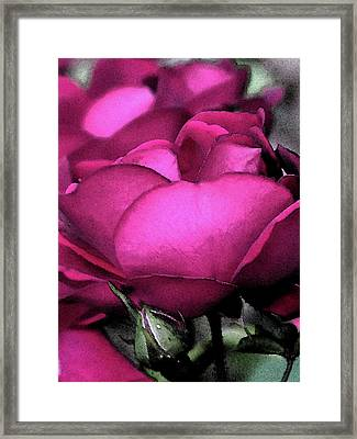 Rose Petals Framed Print by Michele Caporaso