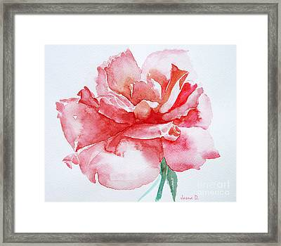 Rose Pink Framed Print by Jasna Dragun
