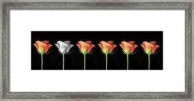Rose Poster. Framed Print by Terence Davis