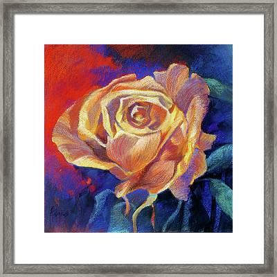 Rose Framed Print by Rae Andrews