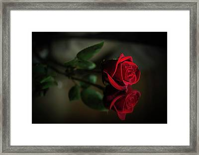 Rose Reflected Framed Print