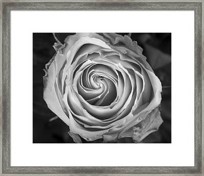 Rose Spiral Black And White Framed Print by James BO  Insogna