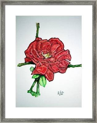 Rose Study No 1 Framed Print by Edward Ruth
