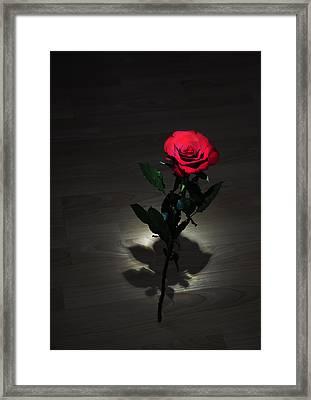 Rose Framed Print by Svetlana Sewell