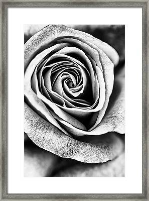 Rose Swirl In Monochrome Framed Print
