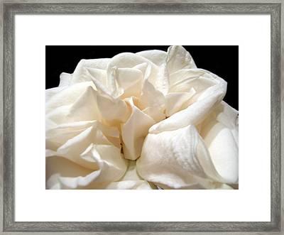 Rose Taffeta Framed Print by Nicole I Hamilton