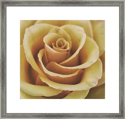 Rose Texture Framed Print