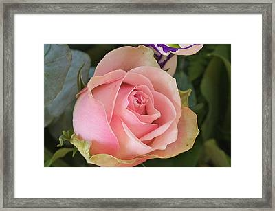 Rose Framed Print by Theo Tan