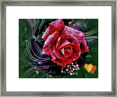 Rose To  Enamoreds     Framed Print by Olga Lyakh