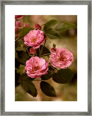 Rose Trio Framed Print by Jessica Jenney