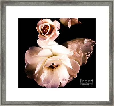 Framed Print featuring the photograph Rose by Vanessa Palomino