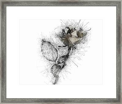 Framed Print featuring the photograph Rose Variation#03 by Richard Wiggins
