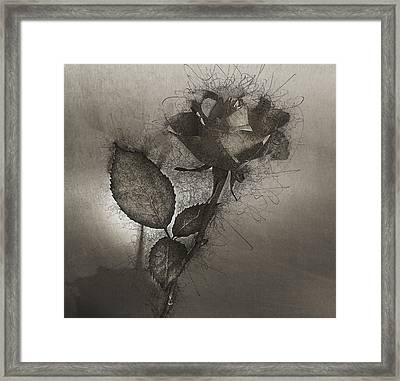 Framed Print featuring the photograph Rose Variation#04 by Richard Wiggins