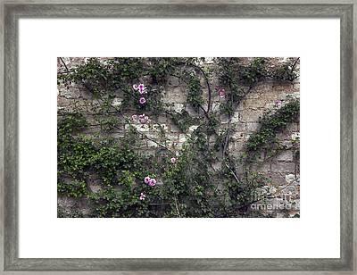 Rose Wall Framed Print by Svetlana Sewell