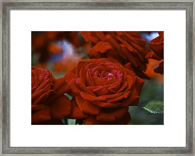Rose Framed Print by Wes Shinn