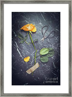 Rose With Scissors Framed Print