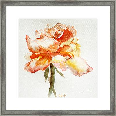 Rose Yellow Framed Print by Jasna Dragun