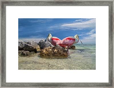 Roseate Spoonbill Florida Keys Framed Print