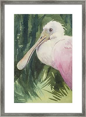 Roseate Spoonbill Framed Print by Kris Parins