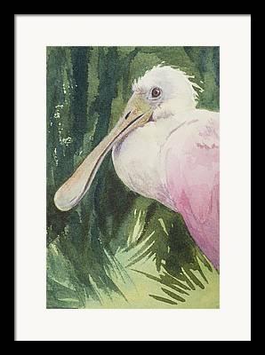 Rare Bird Framed Prints