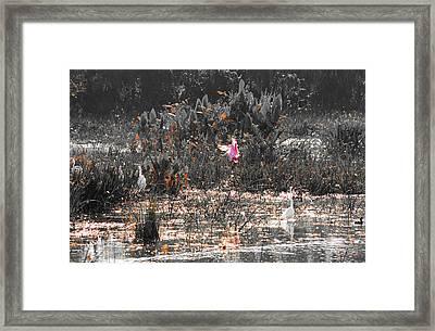 Roseate Spoonbill Select Color Framed Print by Ken Figurski