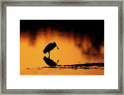 Roseate Spoonbill Silhouette Framed Print by Brian Magnier