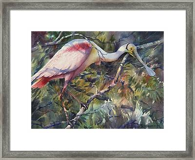 Roseate Spoonbill Framed Print by Sue Zimmermann