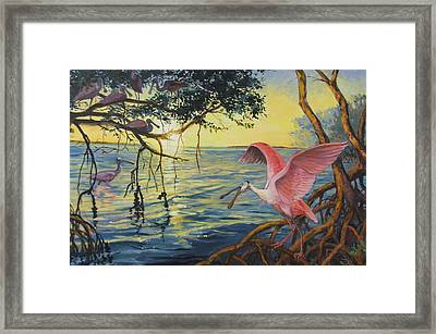 Roseate Spoonbills Among The Mangroves Framed Print by Dianna  Willman