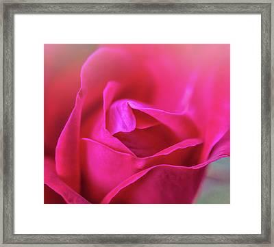 Rosebud Madness Framed Print