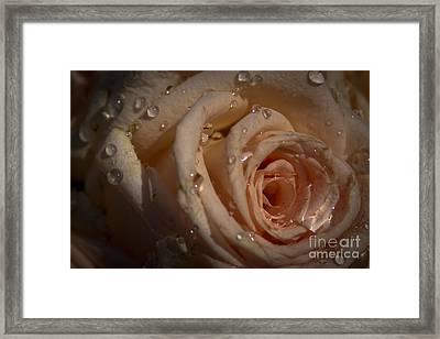 Rosebud Framed Print by Marta Grabska