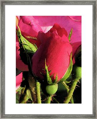 Rosebud Framed Print by Michele Caporaso