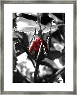 Rosebud Red Framed Print