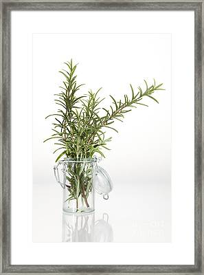 Rosemary Framed Print by Wolfgang Steiner