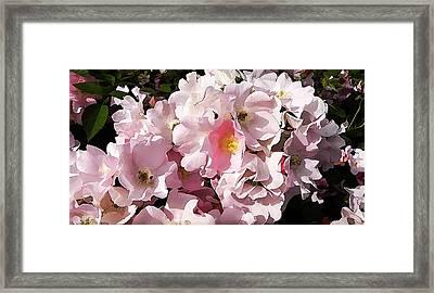 Rosenreigen Framed Print by Lanjee Chee