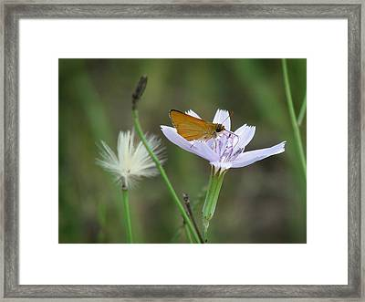 Framed Print featuring the photograph Roserush by Peg Urban