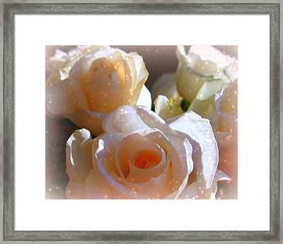 Roses #11 Framed Print