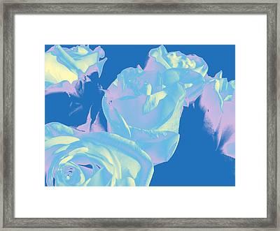 Roses #3 Framed Print
