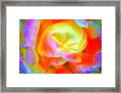 Roses 3 Framed Print