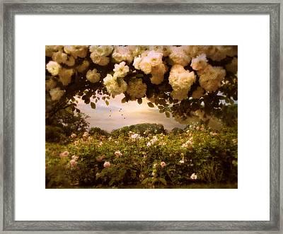 Roses Abound Framed Print by Jessica Jenney