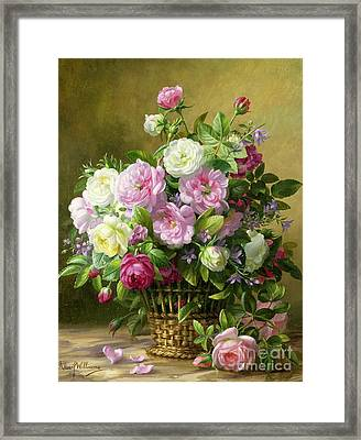 Roses  Framed Print by Albert Williams
