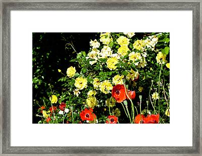 Roses And Poppies Framed Print by Teresa Mucha