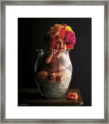 Roses Framed Print by Anne Geddes