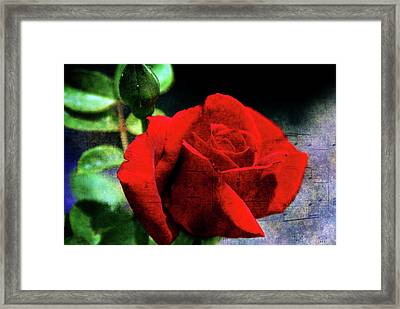 Roses Are Red My Love Framed Print by Susanne Van Hulst