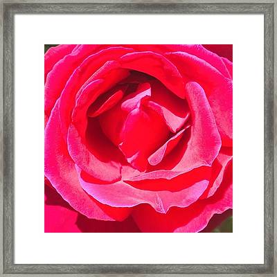 #roses Are #red ...#violets Are #blue Framed Print