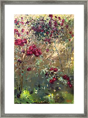 Roses Are Red Framed Print by Ylli Haruni