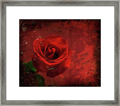 Framed Print featuring the photograph Roses Are Still Red by Bonnie Willis