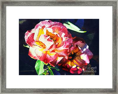 Roses Framed Print by David Lloyd Glover