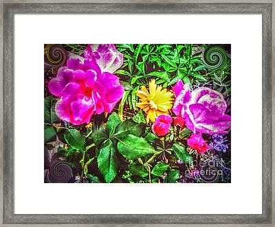 Roses For    Fairies             Framed Print